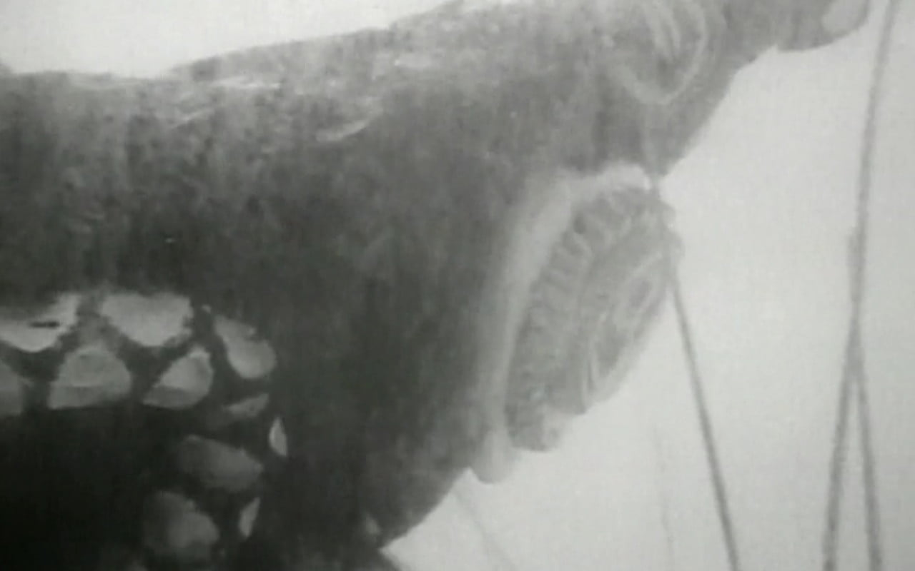 A giant leech from Attack of the Giant Leeches (1959)
