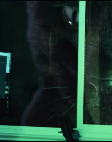 A giant cat looks through the window
