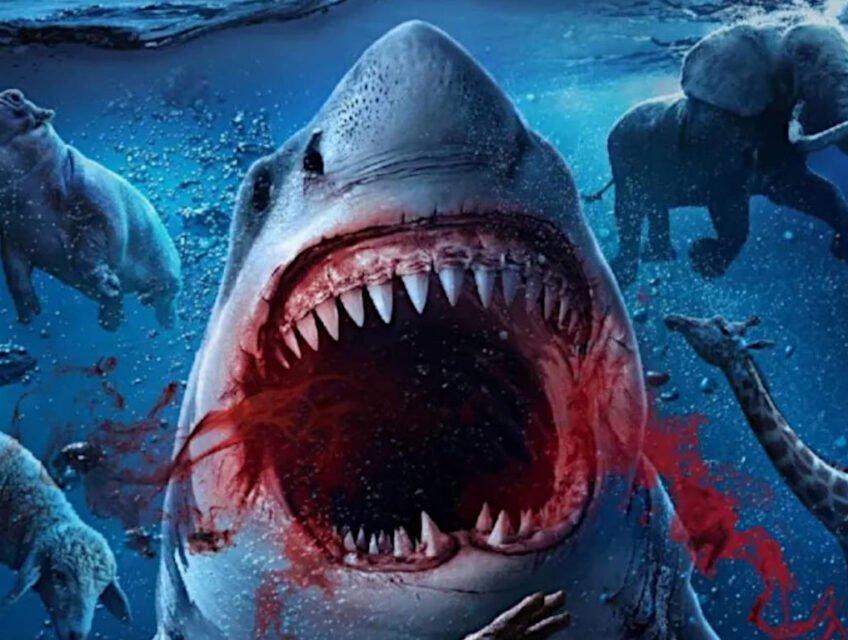 Noah's Shark poster